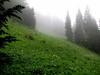 landscape (Skyline Divede Trail, near Mount Baker, Washington)