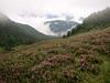 Habitat of Phyllodoce empetriformis (Skyline Divide Trail, near Mount Baker, Washington) (Skyline Divide Trail, near Mount Baker, Washington)