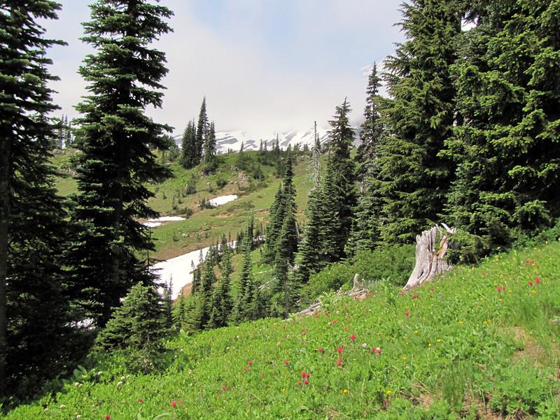 habitat of Castilleja parviflora (Magenta paintbrush) and Abies lasiocarpa (Subalpine fir) (Paradise, Mount Rainier, Washington)