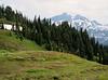 Wildflower meadows, Mount Rainier NP, Skyline Trail