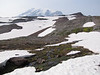 melting snow, scree habitat near Mount Rainier 4342m, Mount Rainier NP, Skyline Trail