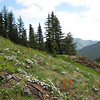 Phlox diffusa and Castilleja spec. (trail to Mount Townsend from upper trailhead)