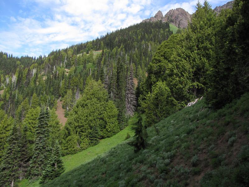 Habitat of Chamaecyparis nootkatensis (Switchback Trail, Olympic Mountains)
