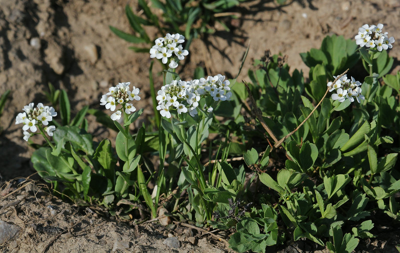 ??  Medicine Bow National Forest.