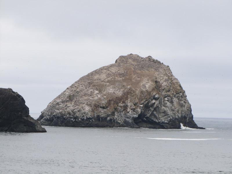 Uria aalge, Common Murre (colony-island) (NL: zeekoeten kolonie)(South of Crescent City, California)
