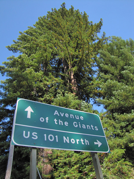 Avenue of the Giants, Humboldt Redwoods Statespark
