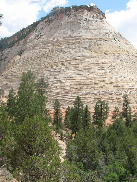 Checkerdoard Meso erosion (Zion National Park Utah)