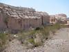 habitat of Twinleaf, Cassia bauhinioides (Nevada)