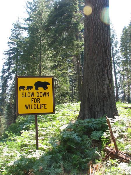 warning...(Yosemite N.P. Siera Nevada)