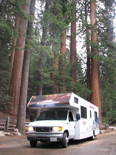 RV and Sequoiadendron giganteum (Sequoia National Park California)