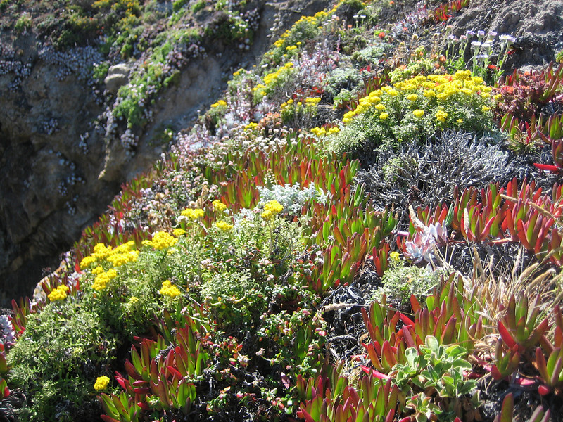 habitat Westcoast Pacific