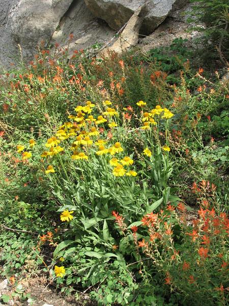 habitat in Sequoia N.P. (California)