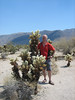 Opuntia bigelovii, Teddy-bear Cholla cactus,(Joshua Tree National Park)