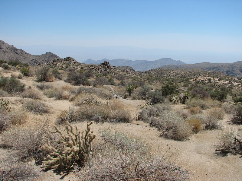 (Joshua Tree National Park)