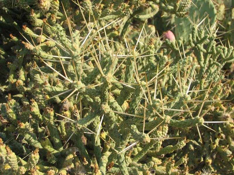 ?? Cactus