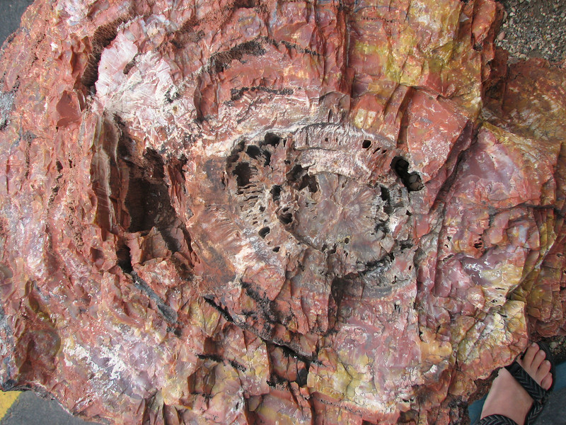 Petrified tree (Capital Reef Nat'l Park)