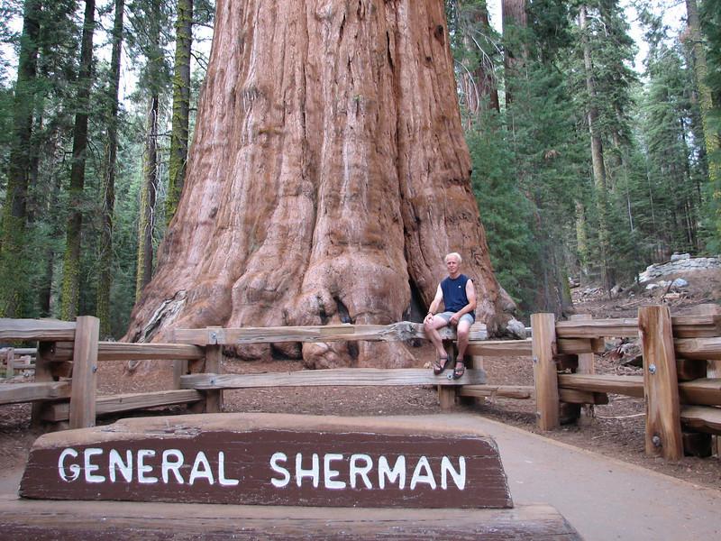 General Sherman Tree, Sequoiadendron giganteum (Sequoia N.P. California)