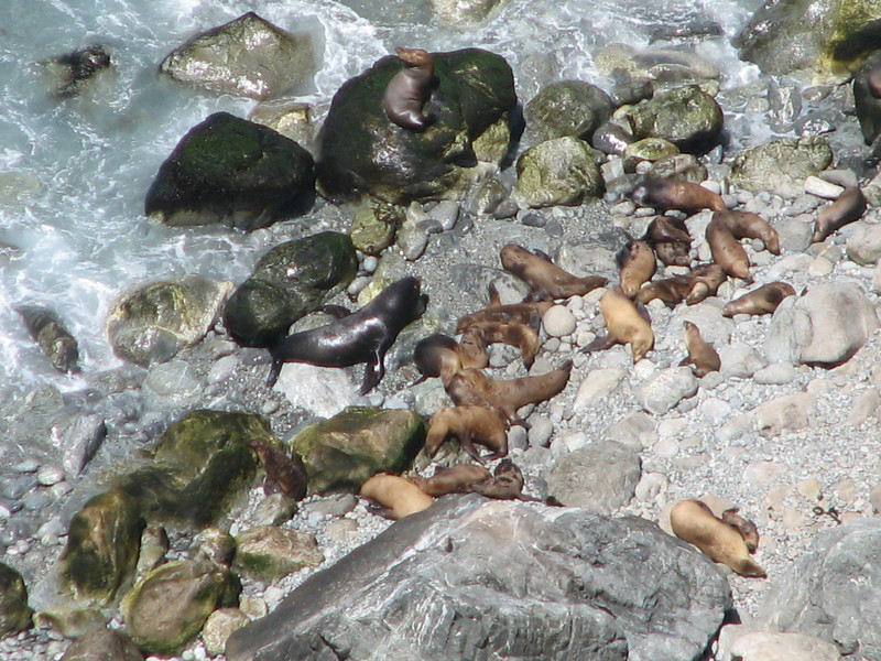 Sea lions (the Montery Bay, National Marine Sanctuary)