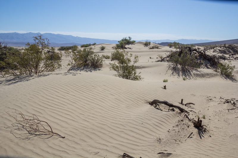 Sand dunes,             Death Valley N.P. California