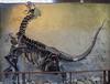 Camarasaurus, juvenile, Jurassic period