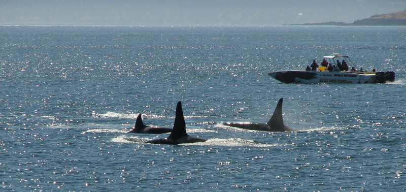 Excursion-boat for seeing the Orca or Killer Whale (San Juan Archipelago USA-Canadian border)(photo Kees Jan)