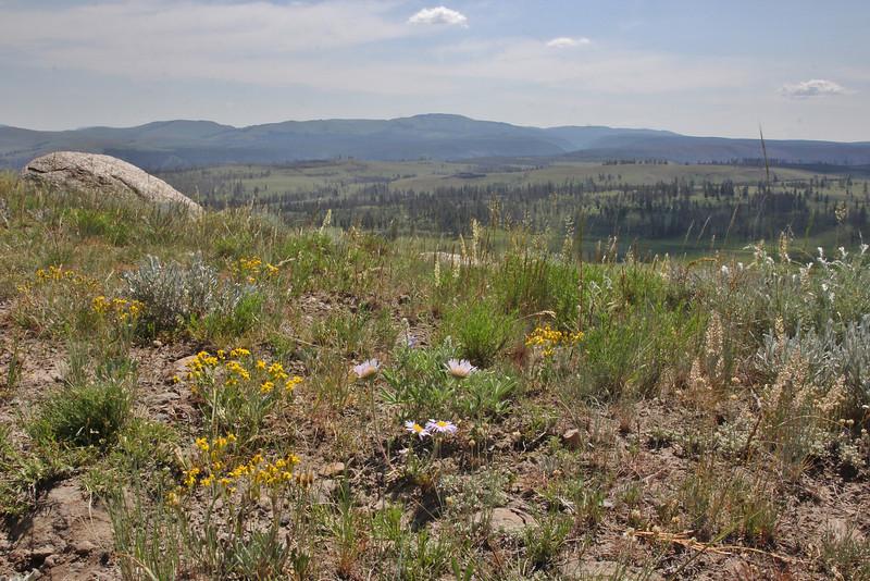 Wildflowers meadow at Washburn Range.