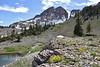Lime stone habitat with Ivesia gordonii, Bridger-Teton National Forest.