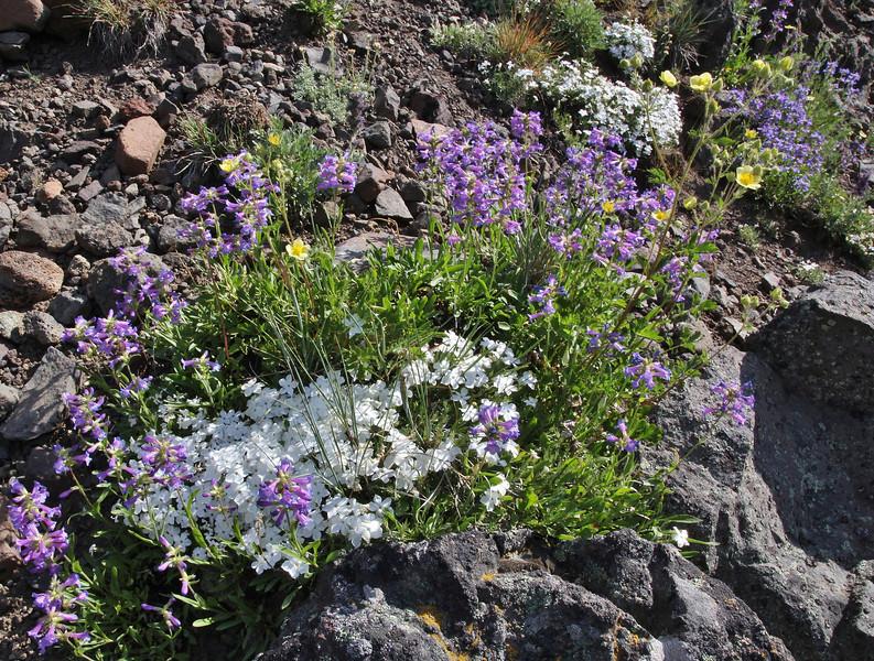 Wildflowers growing on vulcanic rocks.