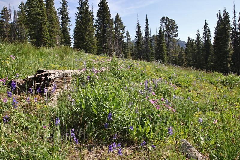 Wildflower-meadow.