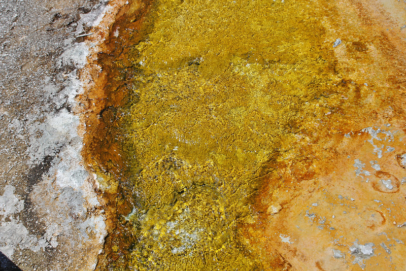Colours, result of bacteria whitch grow in te Geyser. Sapphire Pool.
