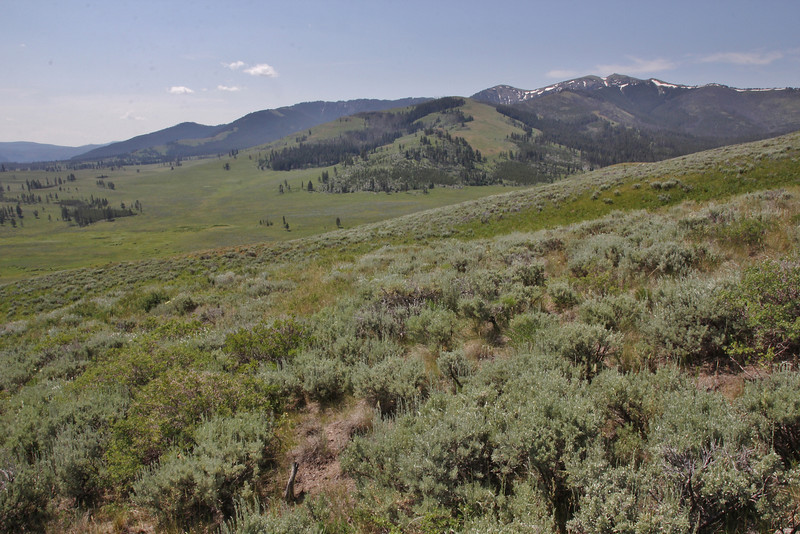 landscape with highest point of Yellowstone, Mount Washburn 3152m.