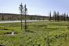 habitat of Drosera anglica, Great Sundew.