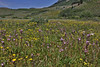 Meadow with wildflowers, Wasatch Range