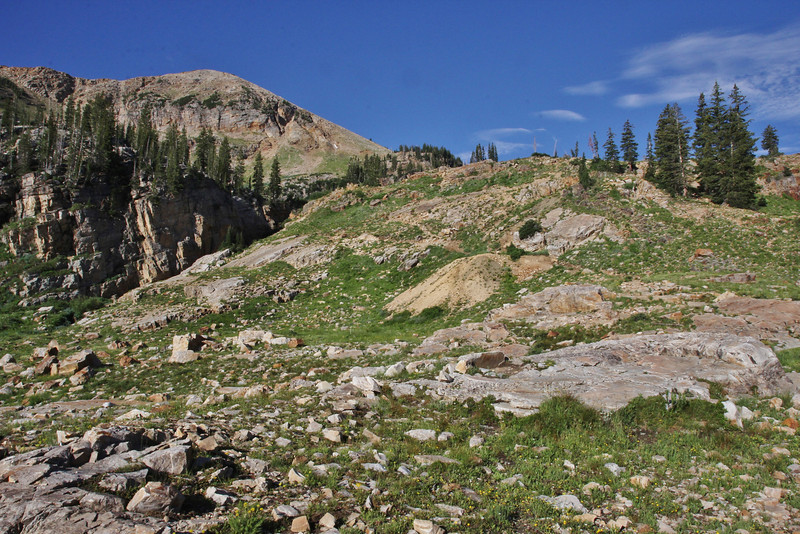 Habitat of Monardella  odoratissima  ssp. glauca, Mountain Mint. Secret Lake Trail, Alta, UT.