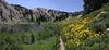 Helianthella uniflora, One-Flower Helianthella. Catherine Pass Trail, Lake Catherine, Brighton, UT.