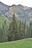 Odocoileus hemionus, female Mule Deer, Secret Lake Trail, Little Cottonwood Canyon, Alta, UT.