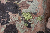 Lichen ?, Bald Mountain Trail, E of Oakley, UT.
