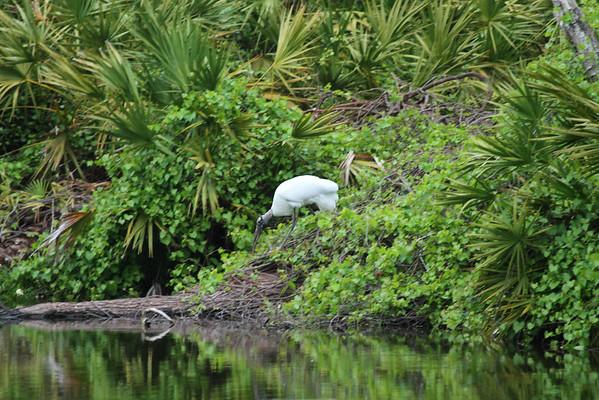 Orlando Florida Birding trip