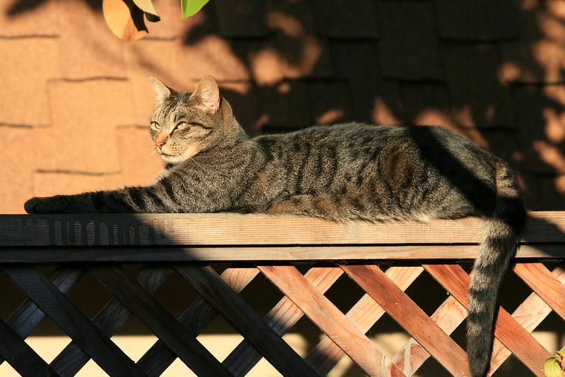 My next door neighbor's kitty.<br /> 26-Oct-2008