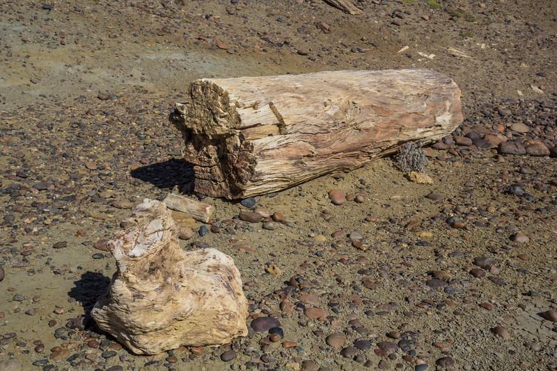Bosque Petrificado José Ormachea