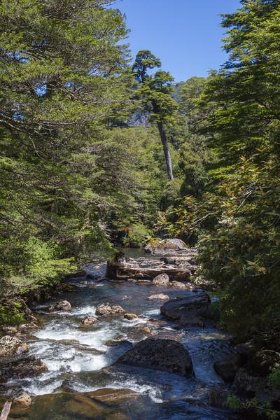 Valdivian Rainforest, Area Puerto Blest, P.N. Nahuel Huapi