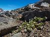 Habitat of Valeriana philippiana