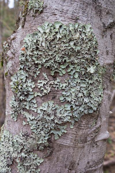 Lichen ?