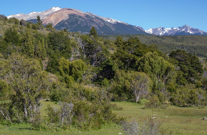 Woodland habitat