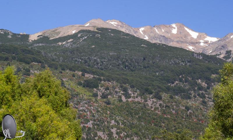 Cerro Dedal, Low slopes/woodland,Nothofagus forest and Alpine zone