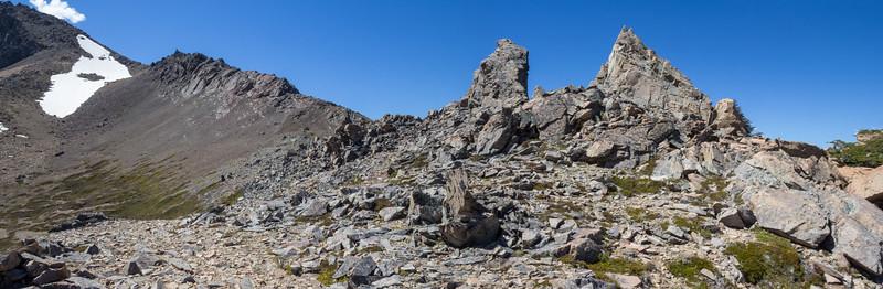 Habitat: near melting snow fields, scree and stony places