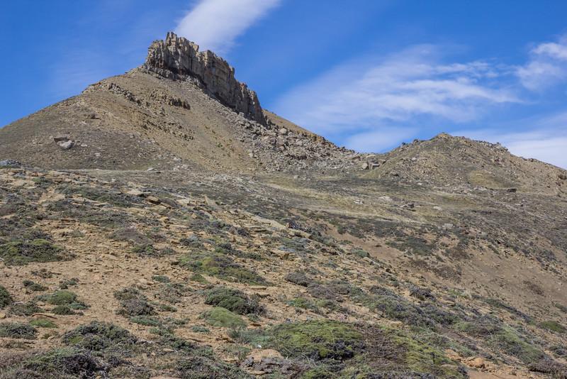 Xerodraba patagonica