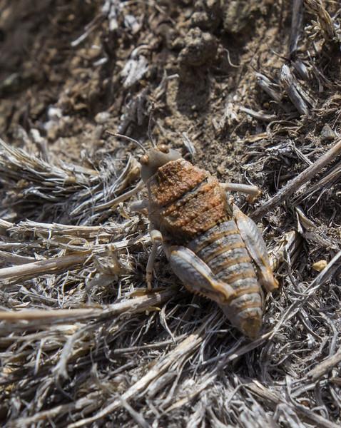 Grasshopper ? 41