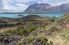 Steppe near Lago Belgrano, habitat of Calceolaria uniflora