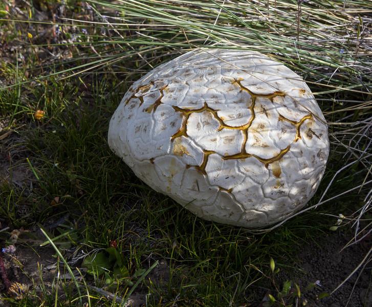 Fungus ?